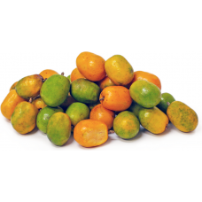 June Plum (Pack of 3)