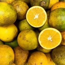 Jamaican Oranges (Pack of 3)